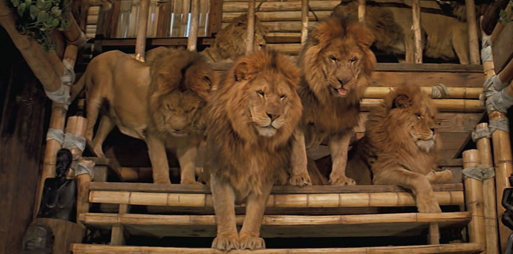 """Time for lunch yet?"" Just some of thre lions to be seen in the re-released 1981 film Roar, which was shown at the 2015 Fantasia International Film Festival in Montreal."