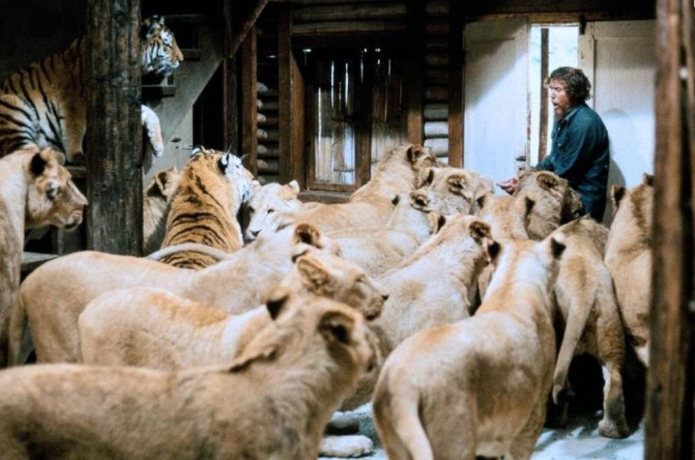 If they want to come in, I don't think that the door is going to stop them. Scene from the 1981 film Roar.