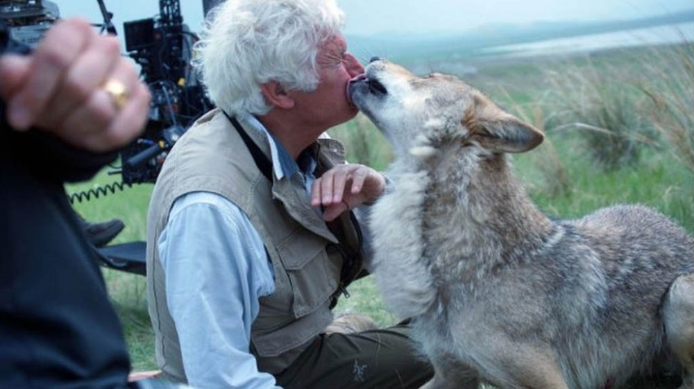 During the filming of Wolf Totem, a wolf named Cloudy became very fond of director Jean-Jacques Annaud.