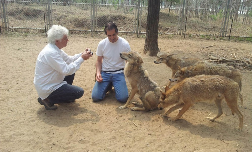 Director Jean-Jacques Annaud, left, and animal trainer Andrew Simpson with some of the trained wolves from the Chinese film Wolf Totem.